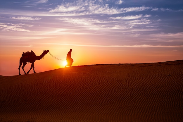 Indian cameleer bedouin with camel silhouettes in sand dunes of thar desert on sunset.