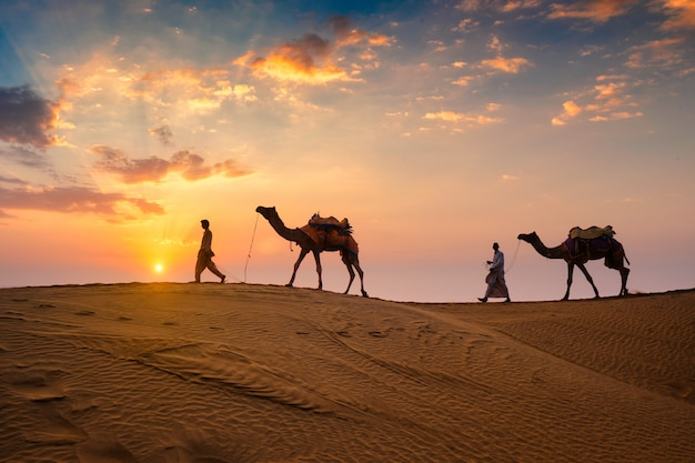 Indian cameleers bedouin with camel silhouettes in sand dunes of thar desert on sunset