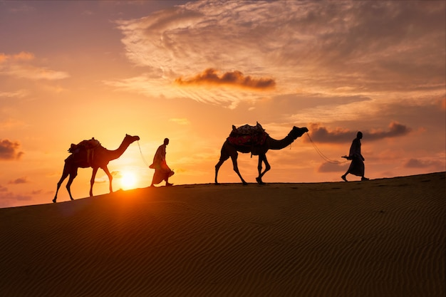 Indian cameleers bedouin with camel silhouettes in sand dunes of thar desert on sunset.