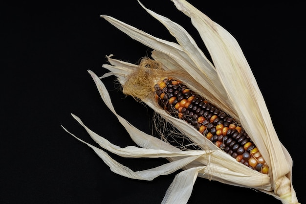 Indian corn isolated on black background