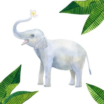 インドのかわいい象の赤ちゃんは白い花を持っています:フランジパニまたはプルメリアと緑の熱帯の葉。手描きの水彩イラスト。孤立。