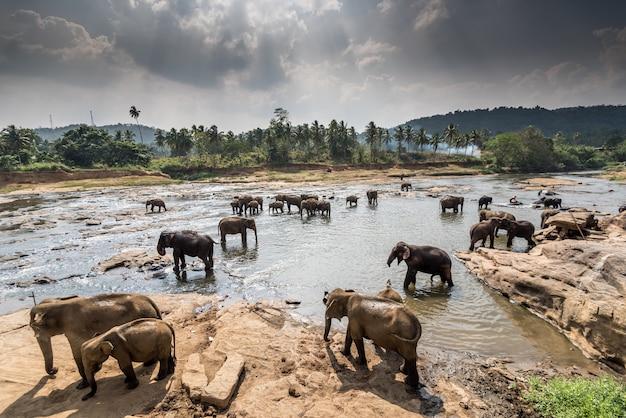 Indian elephant orphanage