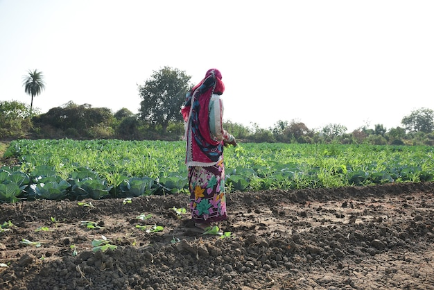 Indian farm worker planting cabbage in the field and holding bunch of small plant of cabbage in hands at the organic farm.
