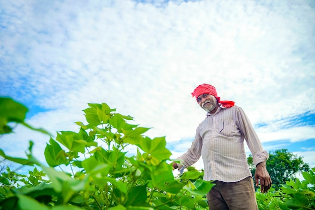 Indian farmer at cotton field