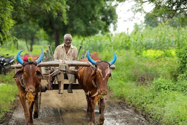 牛車で農業に行くインドの農民