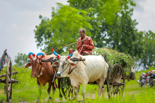 牛車に乗ったインドの農民