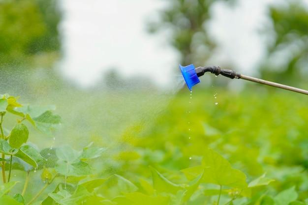 綿花畑で農薬を散布するインドの農民。