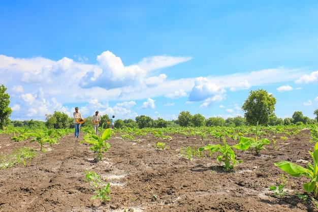 バナナ畑に肥料を散布するインドの農民