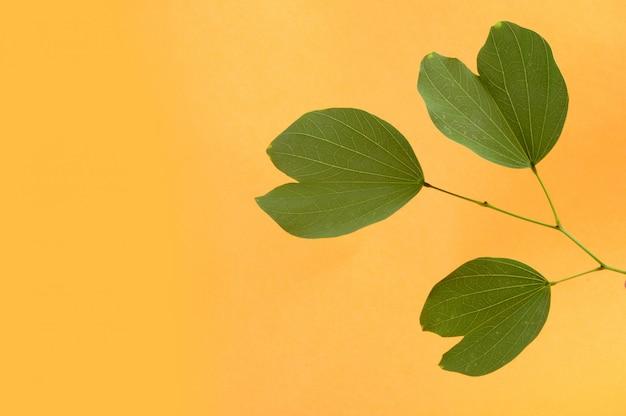 Indian festival dussehra, showing golden leaf ..