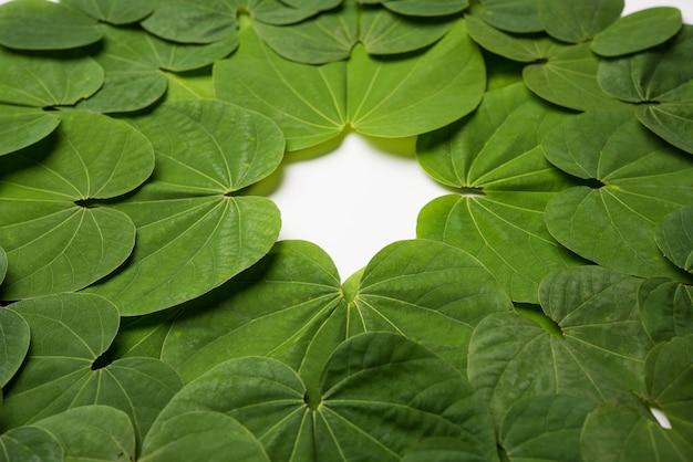 インドの祭りdussehra、象徴的なゴールデンまたはpiliostigmaの葉、またはaptapattiとしても知られているbauhiniaracemosaは、白い背景に円形のパターンで配置されています。