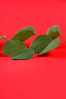 Indian festival dussehra with golden leaf or bauhinia racemosa on a red background
