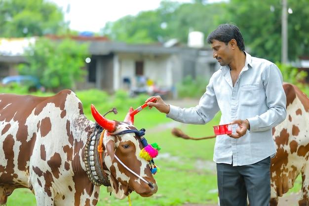 インドのお祭りポーラ、去勢牛の角に色を塗るインドの農民