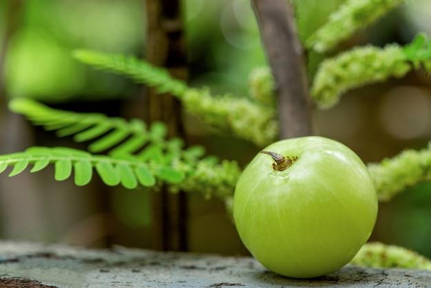 自然のインディアングーズベリーまたはフィランサスエンブリカフルーツ。