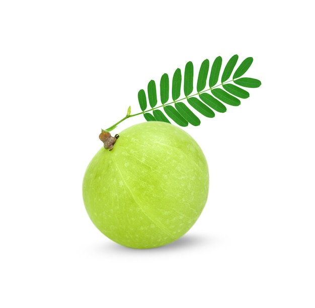 Indian gooseberry ,phyllanthus emblica , amla green fruits isolated