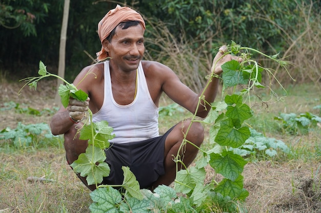 Индийский красивый фермер в своей деревне работает на овощах