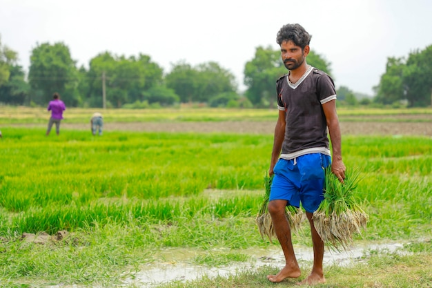 Indian labor working in rice field