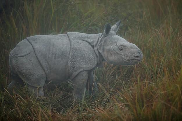 Rinoceronte indiano in asia rinoceronte indiano o un unicorno di rinoceronte cornuto con erba verde