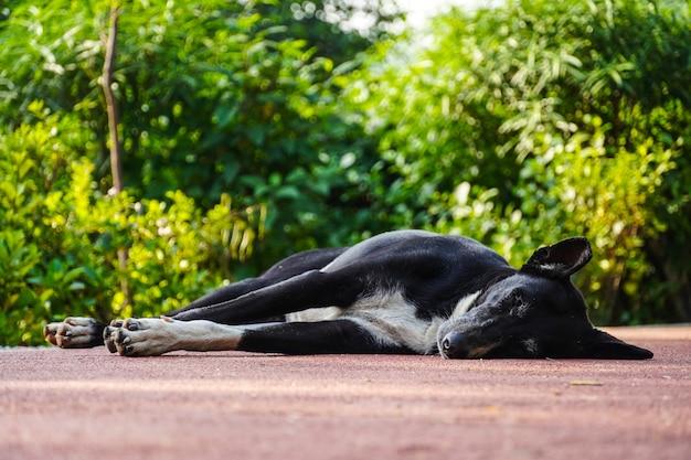 路上で寝ているインドの野犬の黒い画像