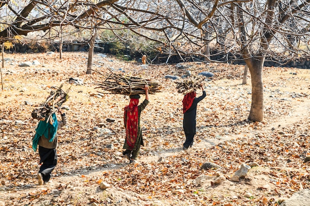 Indian women carrying home the firewood on their head, india