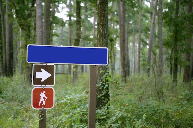 Indicative sign in the forest