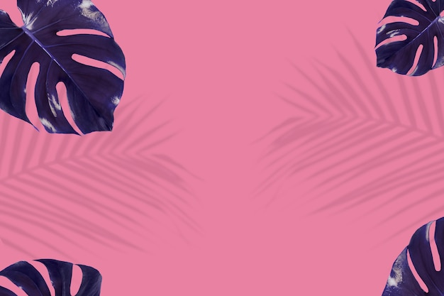 Indigo monstera leaves on pink background
