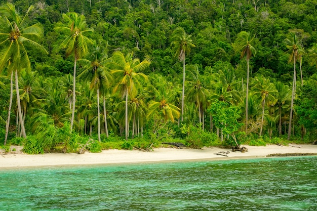 인도네시아. 열대 섬의 야생 해변이 정글로 덮여 있습니다. 하얀 모래와 야자수