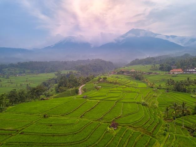 インドネシア。バリ島。棚田の夕べ。雨上がりの山の霧。航空写真