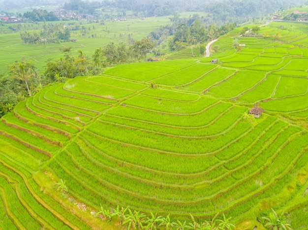 인도네시아. 발리 섬. 계단식 논과 인도네시아 마을. 조감도