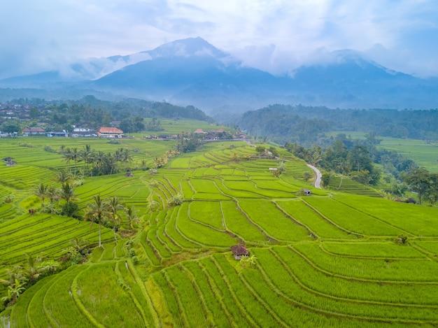 インドネシア。雨上がりのバリ島の田んぼ。背景の霧の中の山々/空撮