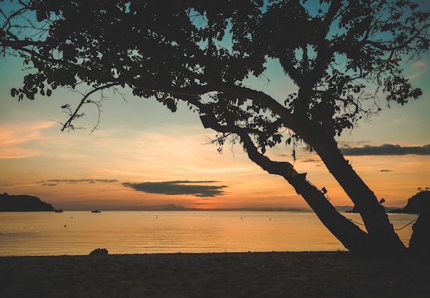 Indonesia sunset silhouette, black tree at golden seascape under colorful sky in asia evening. relax and serenity of ocean bay and sandy beach at coast of asian island. small ships on water surface