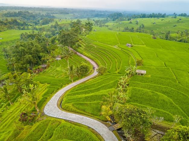 インドネシア。多層の田んぼ、ヤシ、小屋のテラス。空の曲がりくねった歩道。航空写真
