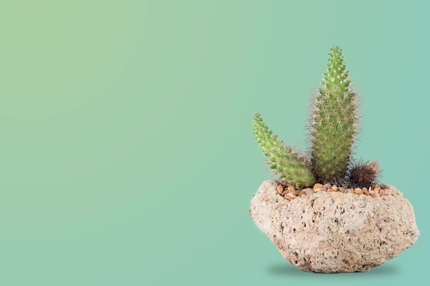 Indoor cacti in a volcanic stone pot with a pastel green background with room for text to the side