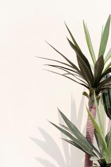 Крытый украшения тени растений на белой стене с дизайнерским пространством