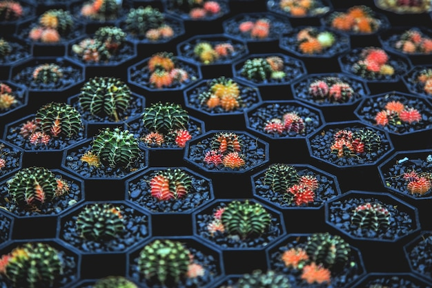 Indoor garden colorful cactus with black stone