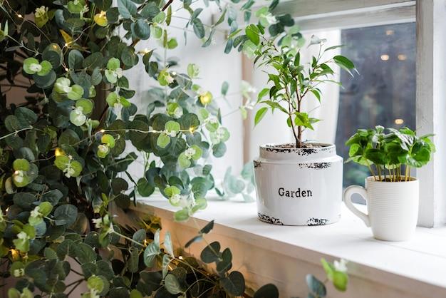 창턱의 실내 정원, 실제 실내 인테리어의 녹색 집 실내 식물
