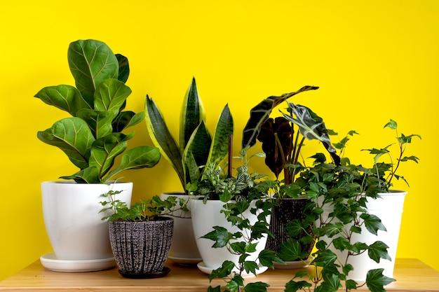밝은 노란색 배경에 실내 가정 정원 식물 컬렉션 다양한 꽃