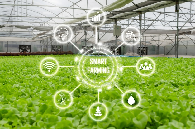 시각적 아이콘, 농업 사업, 스마트 농업, 디지털 기술 및 건강 식품 개념 온실 정원 보육 농장에서 실내 유기 수경 신선한 녹색 양상추 야채 생산