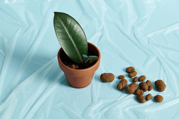 青い透明な保護フィルム上の植物のための膨張した粘土の隣の土鍋の屋内植物。ハイアングルビュー