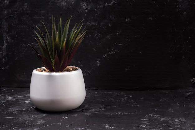 Комнатное растение в белом горшке на черном абстрактном фоне с копией пространства.
