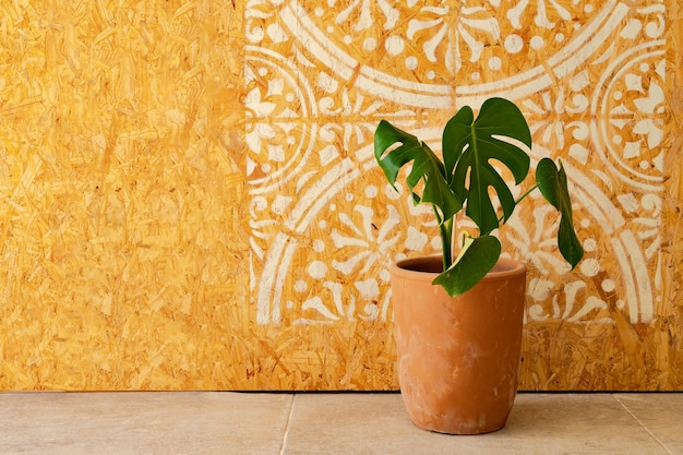 Indoor plant in a pot with mandala image on the wooden wall
