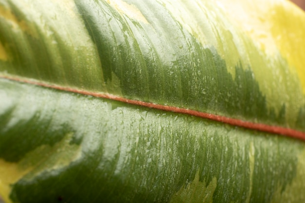Dettagli sulle trame delle piante da interno