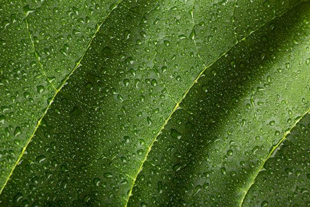 屋内植物テクスチャの詳細