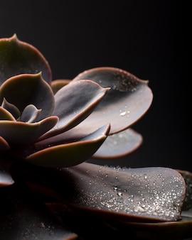 屋内植物テクスチャの詳細 無料写真