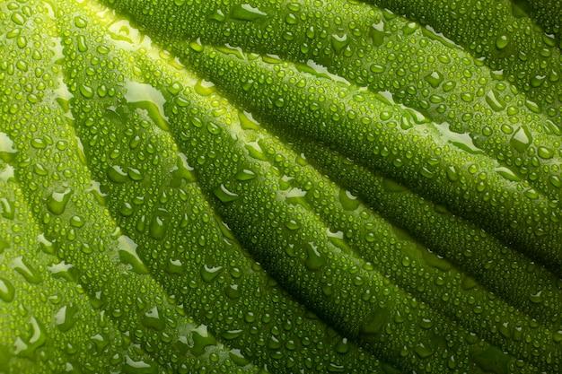 실내 식물 질감 세부 사항