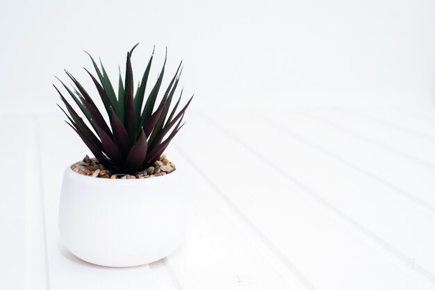 Indoor plant on a white wooden surface on a white brick background. light modern template for blog, text, advertisement