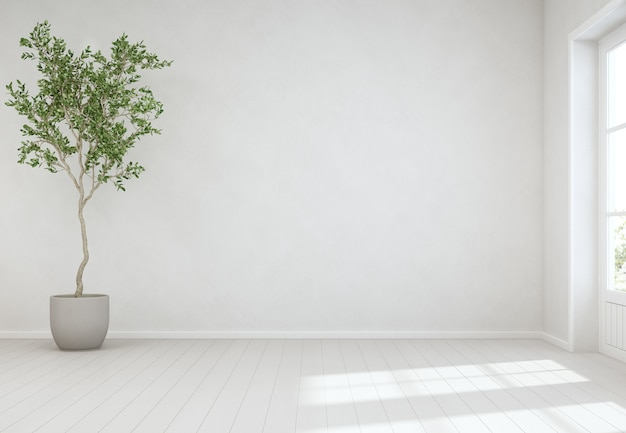 Indoor plant on wooden floor with empty white concrete wall