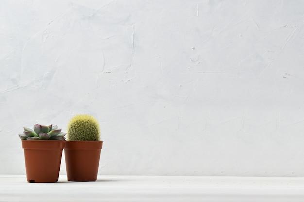 흰색 선반에 집에서 실내 식물.