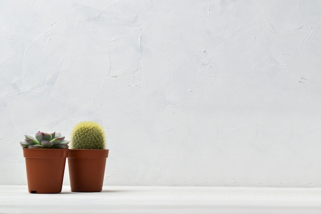 Indoor plants at home on a white shelf.