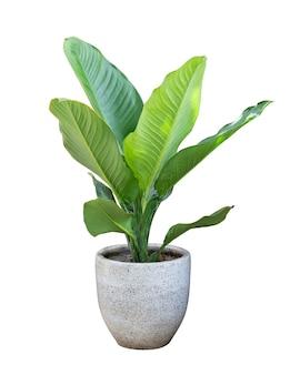 Комнатные растения в горшке, изолированные на белом фоне.