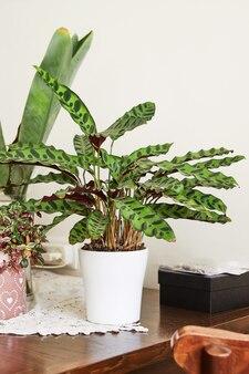 내부의 실내 식물, 테이블의 흰색 냄비에 발견 된 잎이있는 꽃.